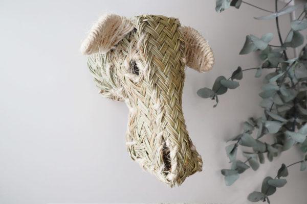 Cabeza trofeo oveja